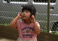 沖縄問題緊急500円上映『誰も知らない基地のこと』