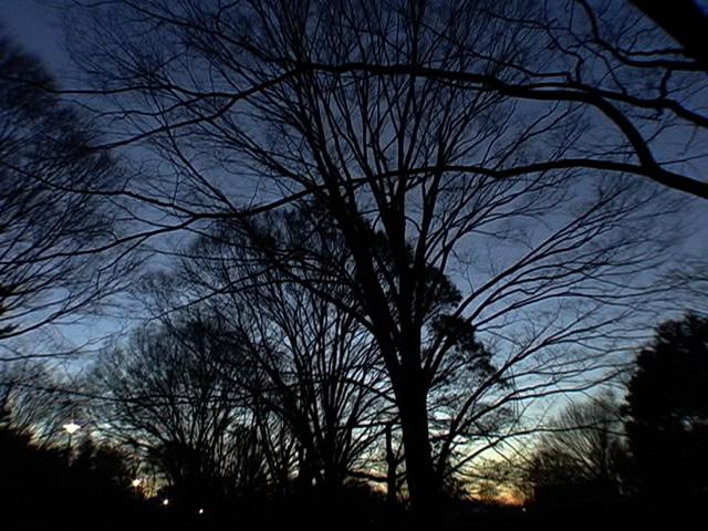 03_main_tree
